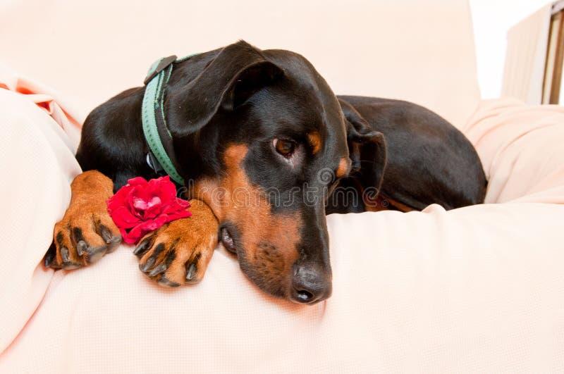 Mycket romantisk hund och blomma arkivbild