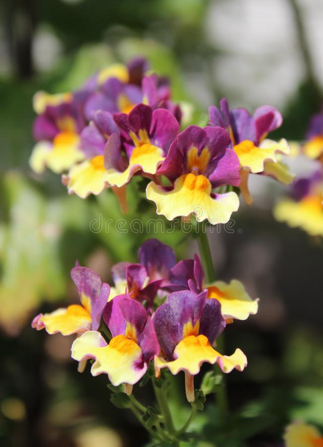 Mycket små blandade färgblommor blommar i vår arkivbild