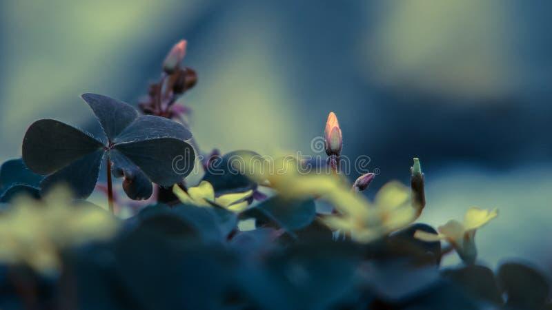 Mycket små blommor stänger sig upp arkivbild