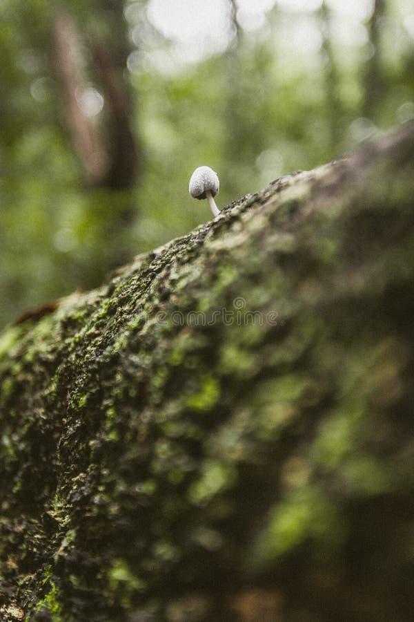 Mycket små champinjoner som växer ut ur träd royaltyfri fotografi