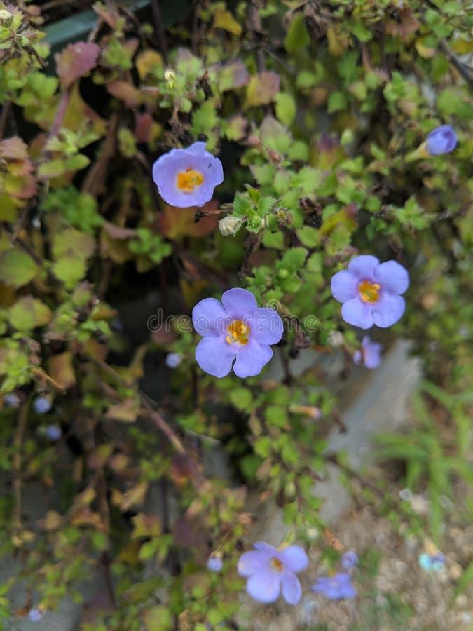 Mycket små läckra små blommor arkivfoto