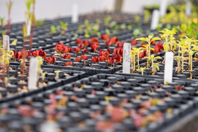 Mycket små växter int honom växthus royaltyfri foto