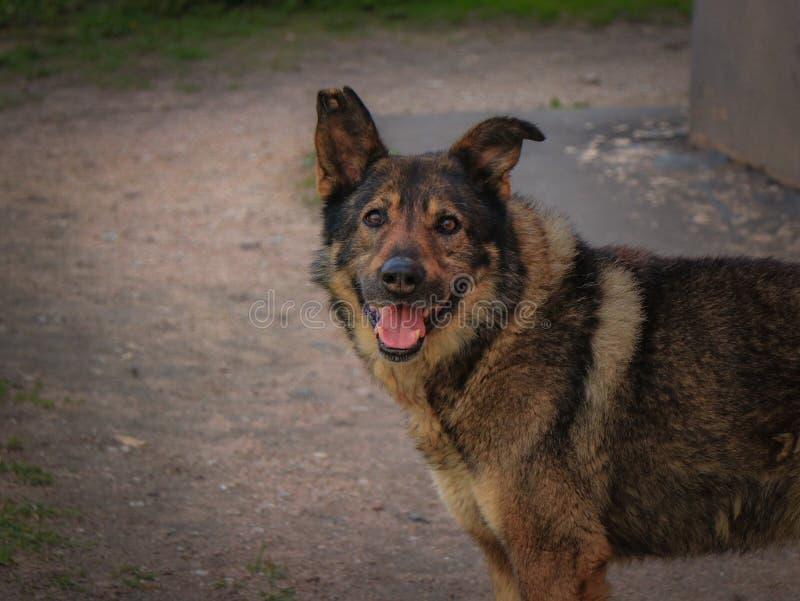 Mycket tillfällig hund för sort royaltyfri fotografi