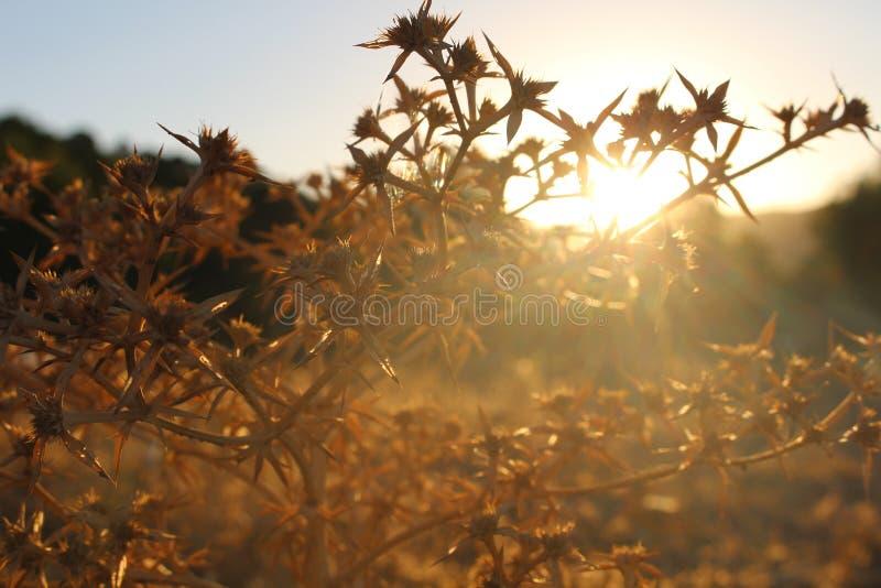 Mycket trevlig naturlig Sunsit skog arkivfoton