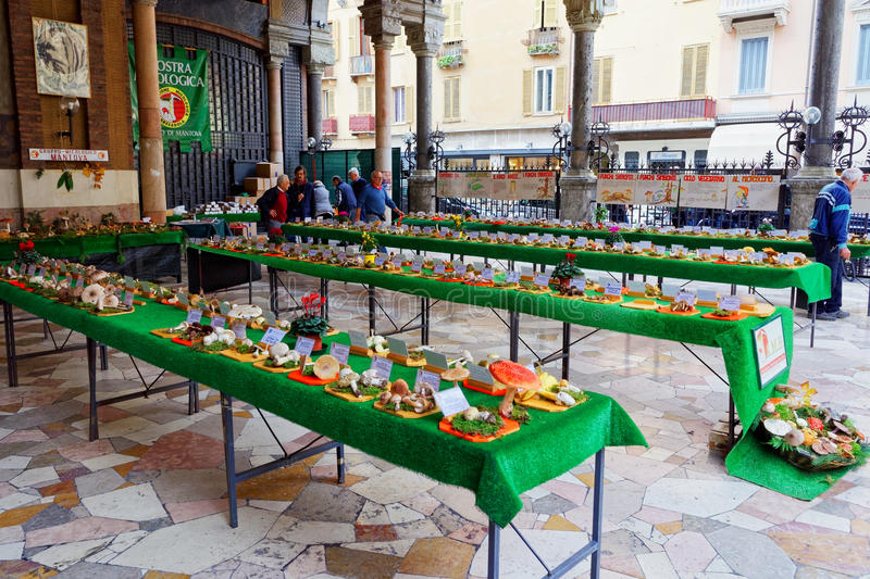 Mycological exhibition of mushrooms and Italian mycologists in Mantua royalty free stock photos