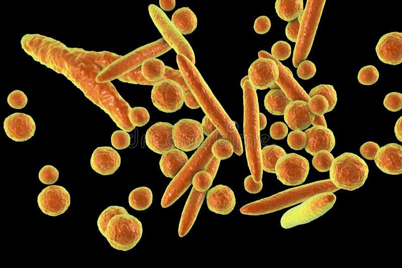 Mycoplasma bakterie, ilustracja ilustracji