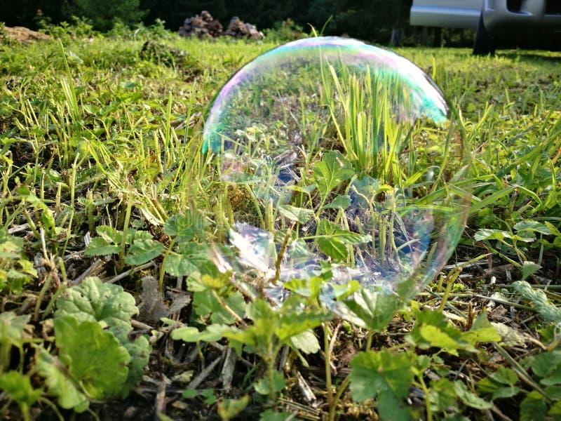 Mydlany bąbel na zielonej trawie fotografia stock