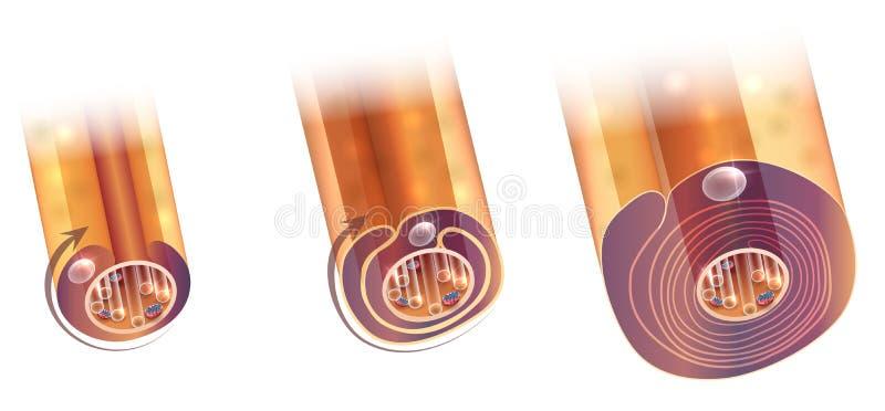 Myelination delle cellule nervose illustrazione di stock