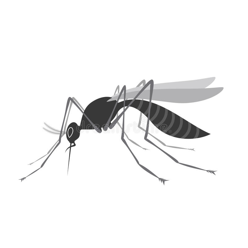 Mygga med stingeren som isoleras på vit bakgrund Zika virus vektor illustrationer