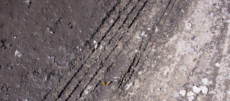Myj?cy fritillary Argynnis paphia motyl zdjęcie stock