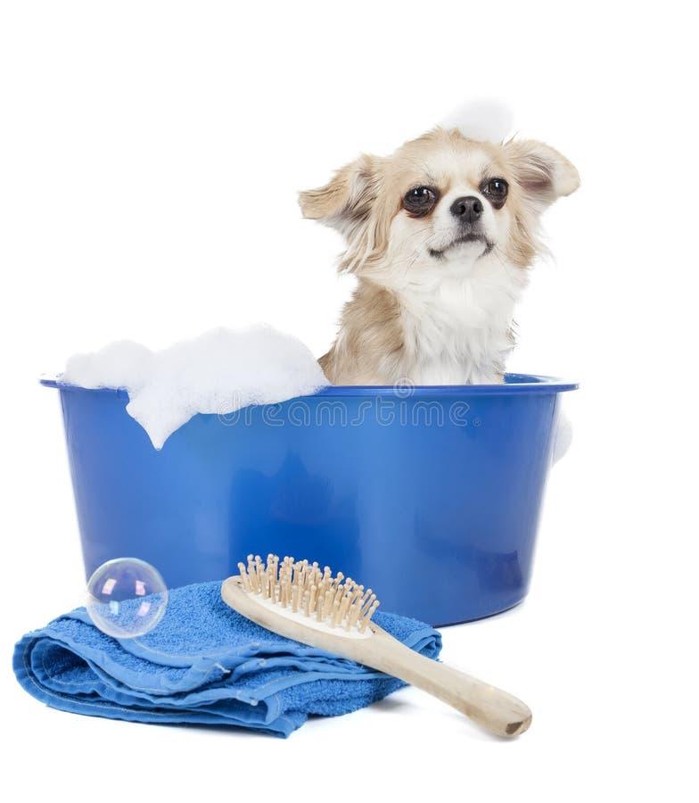 Myje psa fotografia stock