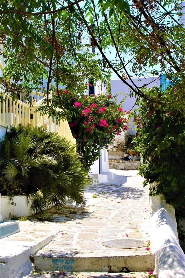 Mykonos, casas brancas, flores, trajeto, turismo e ilha grega imagem de stock royalty free