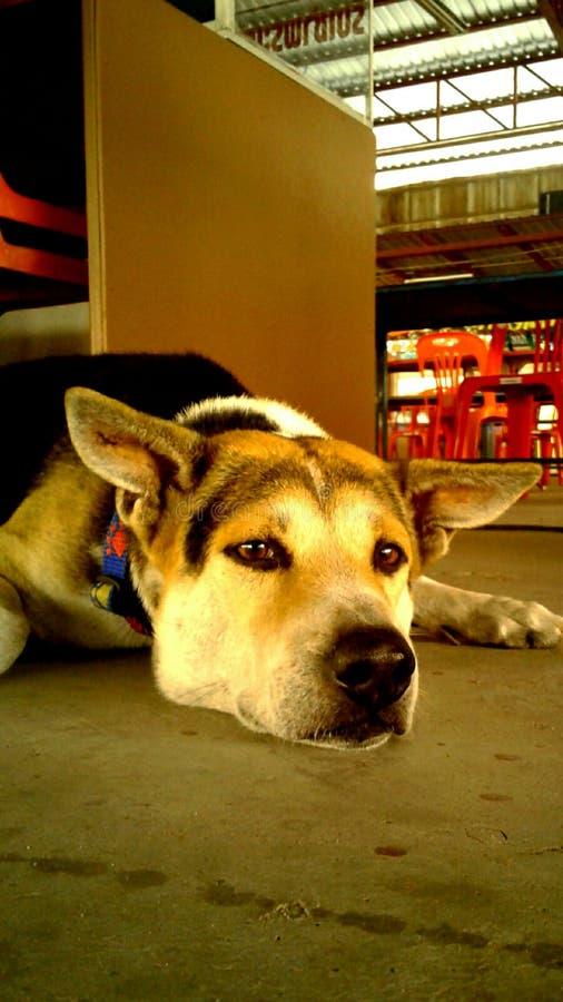 Mylove que espera del grannydog del perro fotos de archivo