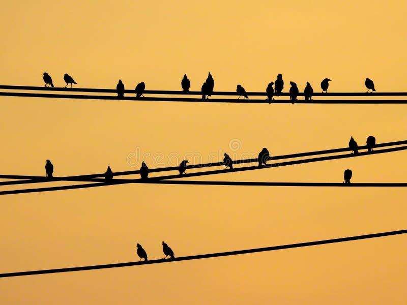 Mynasvogels die op draden en zonsonderganghemel zitten stock afbeeldingen