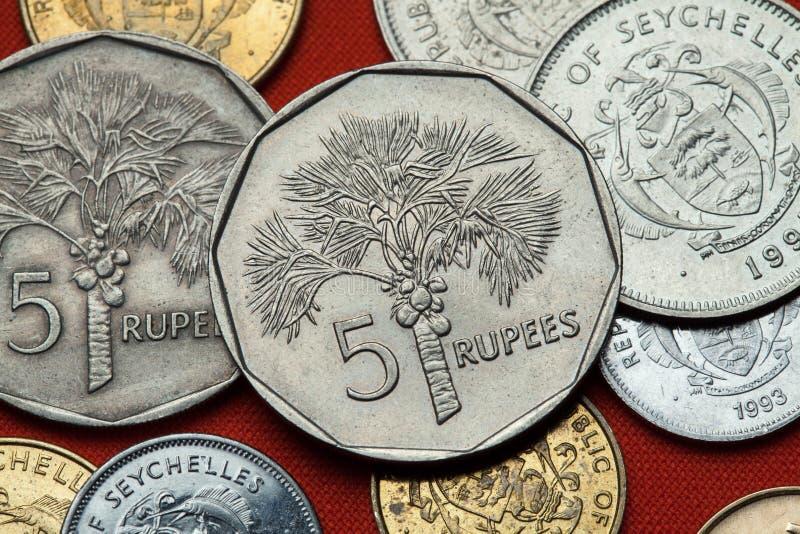 Mynt av Seychellerna kokosnötcocosnuciferaen gömma i handflatan arkivfoto