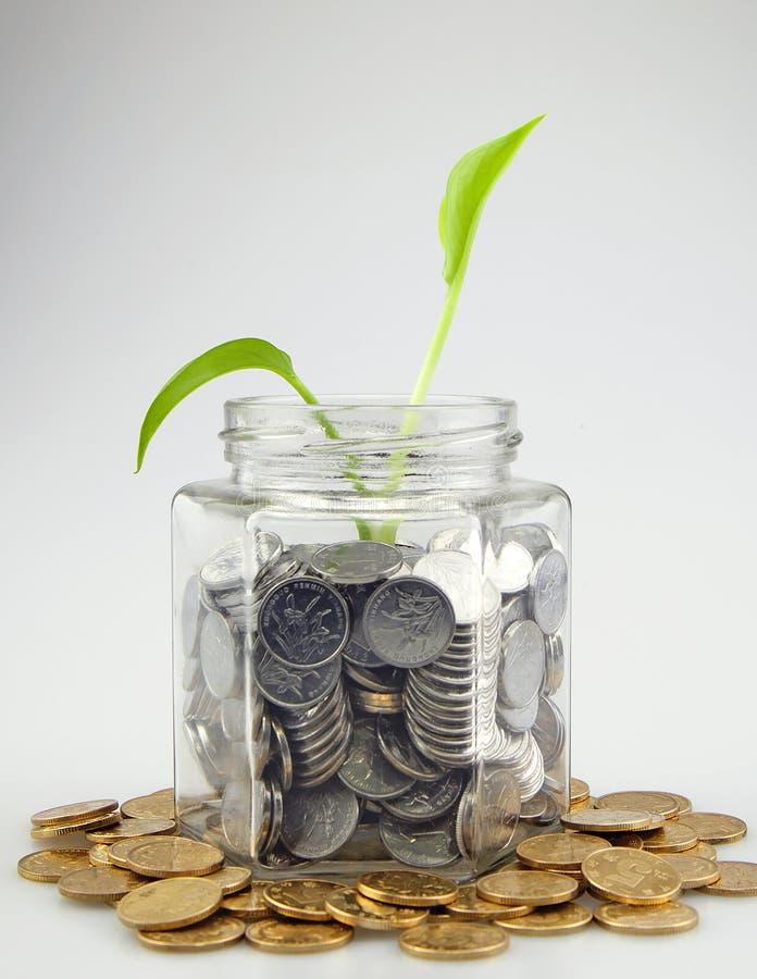 Mynt och gräsplanknopp som växer i exponeringsglas royaltyfria bilder