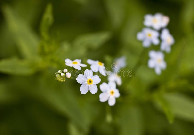 Small blue flowers on green background forget me not stock photo download small blue flowers on green background forget me not stock photo image of mightylinksfo
