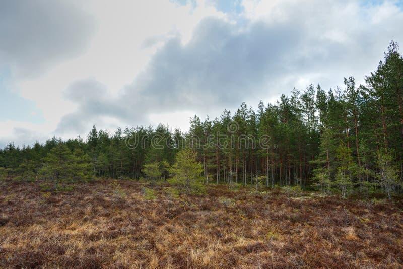 Myr med skogen arkivbilder