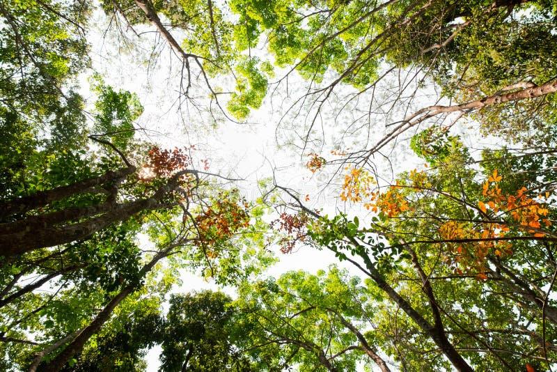 Myraögonsikt av det färgrika sidaträdet i djungelbakgrund fotografering för bildbyråer