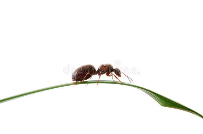 myragräs arkivfoto