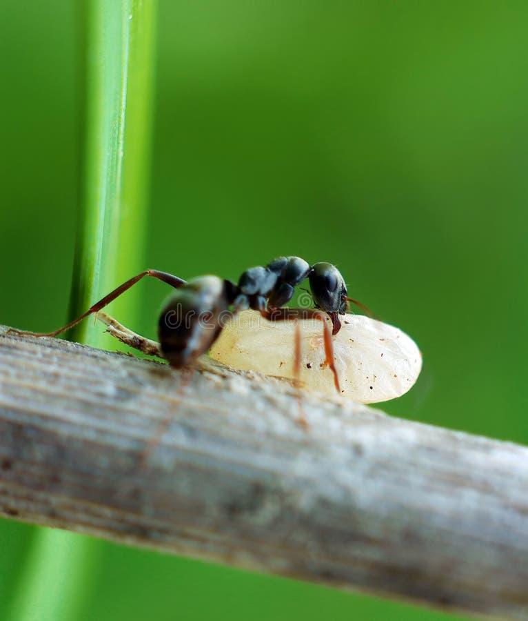 myrakokong fotografering för bildbyråer