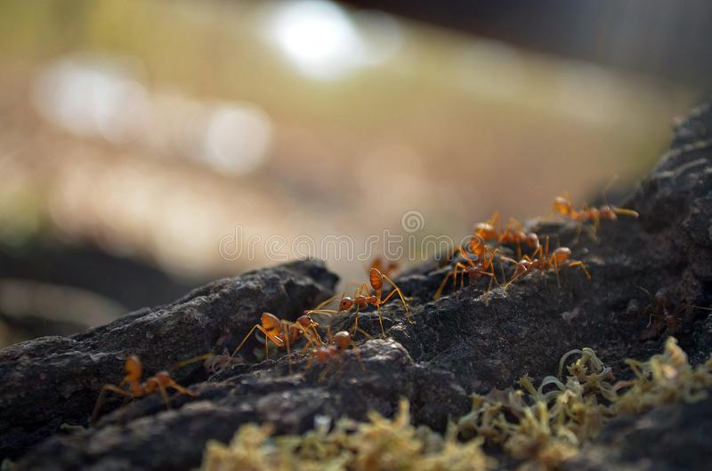 Myran går royaltyfri bild