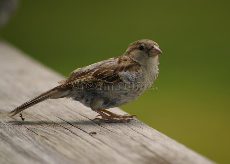 Myran kan slå fågeln arkivfoton