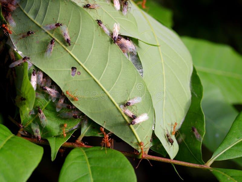 Myrarede arkivfoton