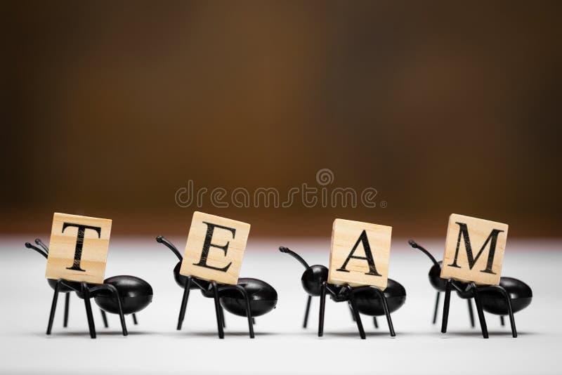 Myror bär bokstäver som utgör ordlaget royaltyfria foton