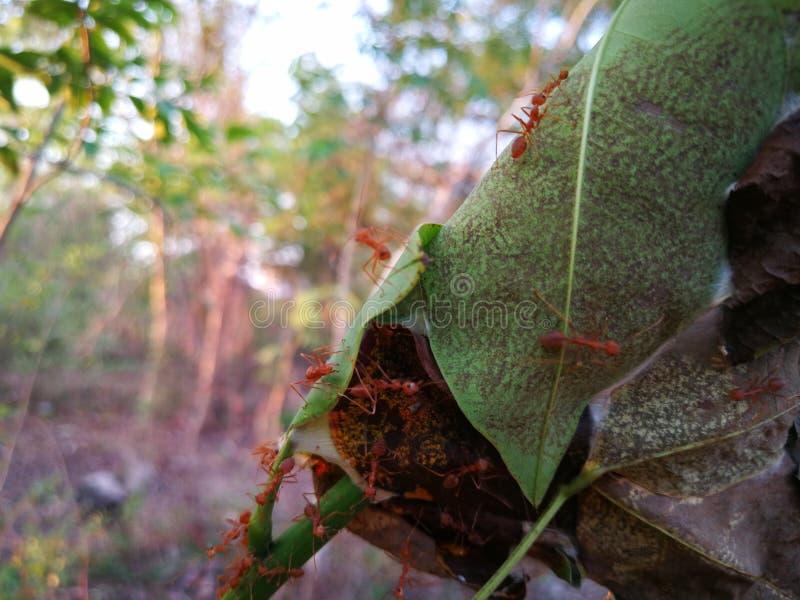 Myror kommer ut att f? solen i aftonen arkivfoto