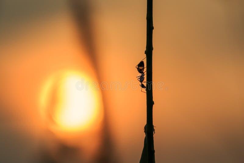 Myror kryp arkivbild
