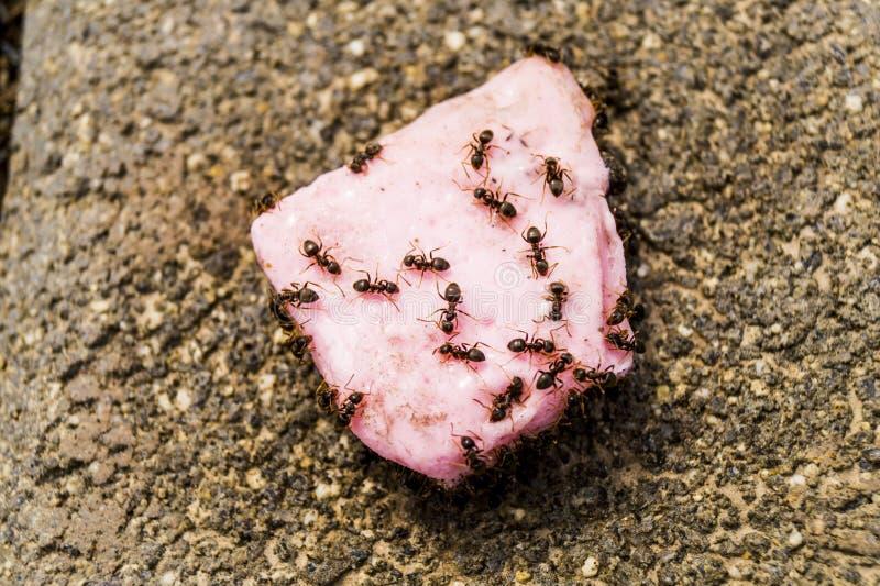 Myror och godis arkivfoto