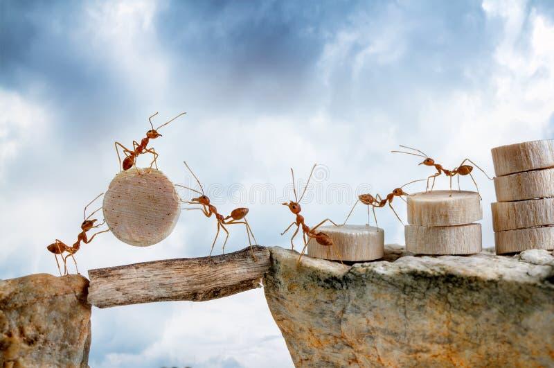 Myror som bär den wood korsningen klippa arkivbilder