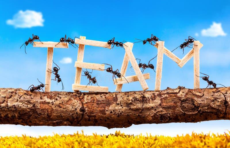 Myror som bär formuleringlaget arkivfoto