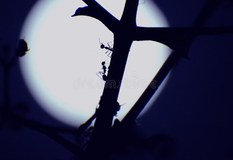 Myror som spelar på oavkortad månenatt för träd royaltyfria bilder