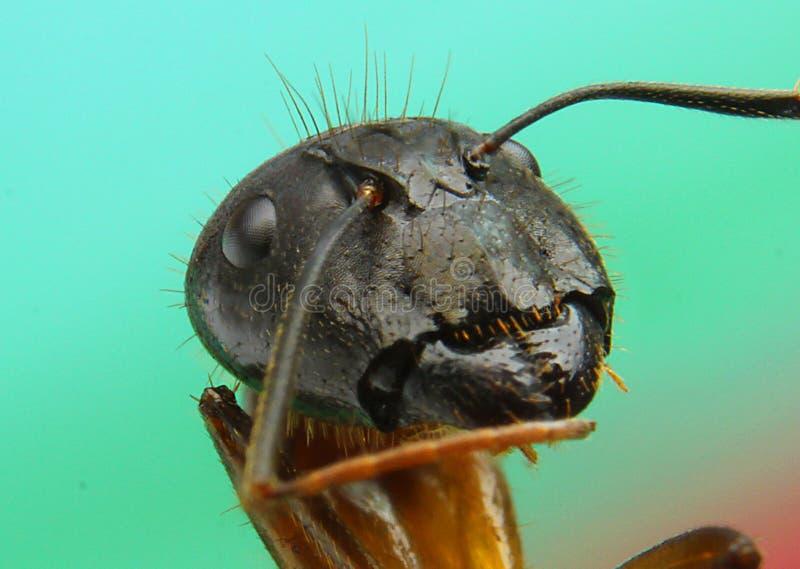 Myror stänger sig upp arkivbilder