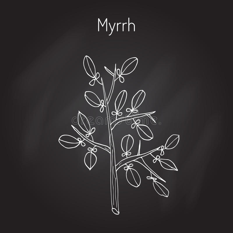 myrrh stock illustrationer