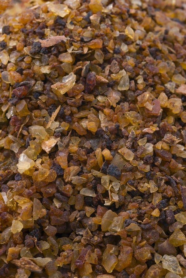 Myrrh (Commiphora myrrha) royalty free stock photo