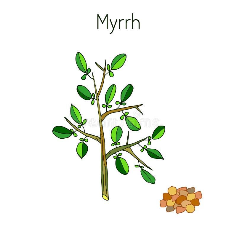 myrrhe vektor abbildung
