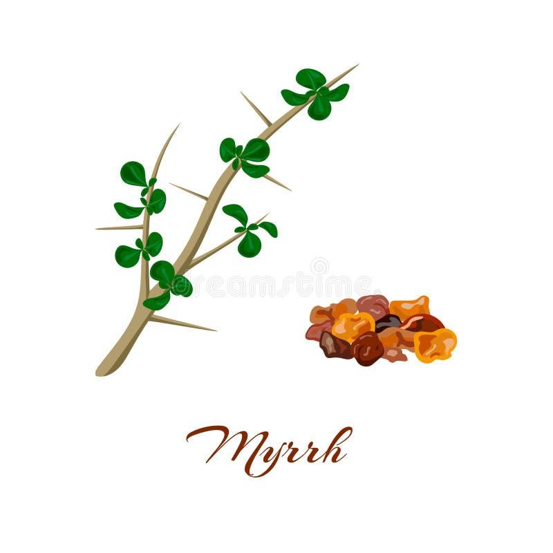 myrrhe Myrrha de Commiphora illustration libre de droits