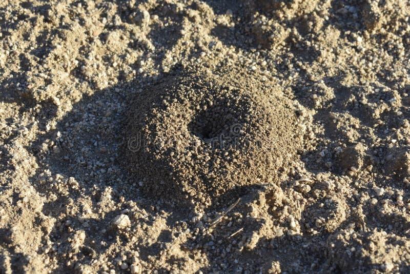 Myrstack på jordningen royaltyfri foto