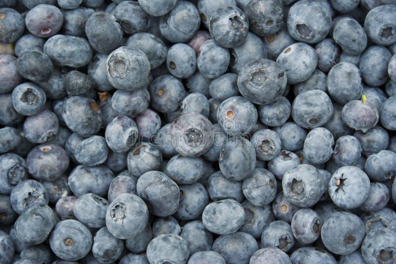 Download Myrtilles photo stock. Image du fruit, sain, baie, frais - 8665392