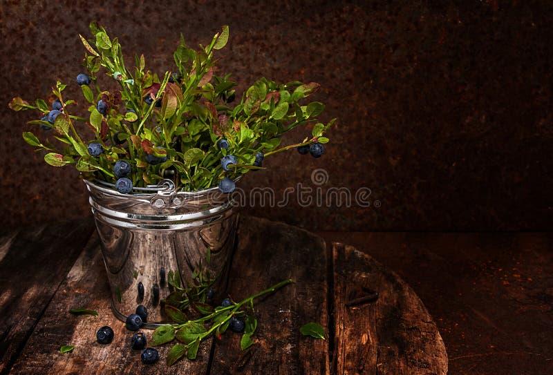 Myrtilles de forêt dans un seau images libres de droits