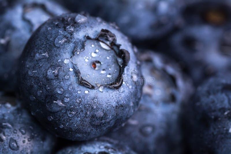 Myrtilles mûres fraîches avec des baisses de rosée Fond de baie Macro photo photographie stock