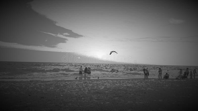 Myrtle Beach, νότια Καρολίνα - πουλί κατά την πτήση στοκ φωτογραφία με δικαίωμα ελεύθερης χρήσης