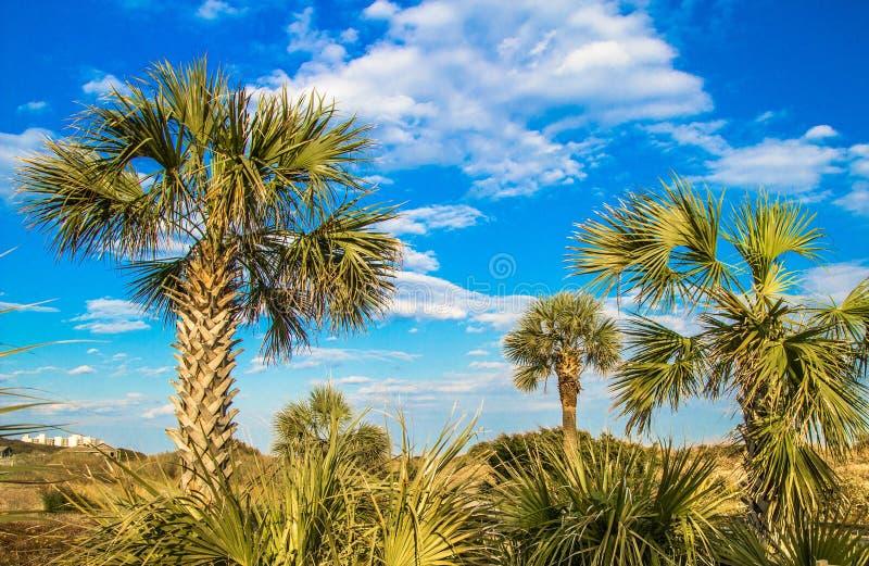 Myrtle Beach Coast royaltyfria bilder