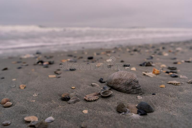 Myrtle Beach shells. Shells and stones on Myrtle Beach, South Carolina, USA stock photos