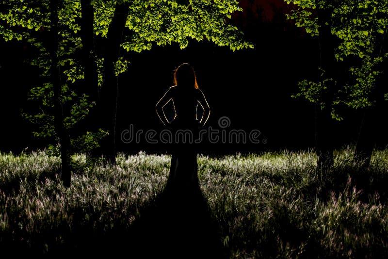 Mystère dans la forêt photo libre de droits
