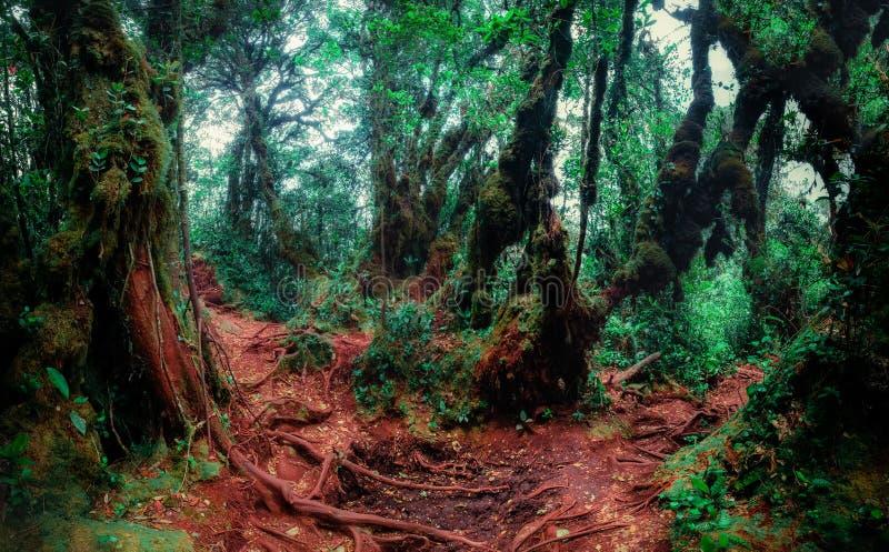 Mysteriöse Vegetation des tropischen Regenwaldes lizenzfreie stockbilder