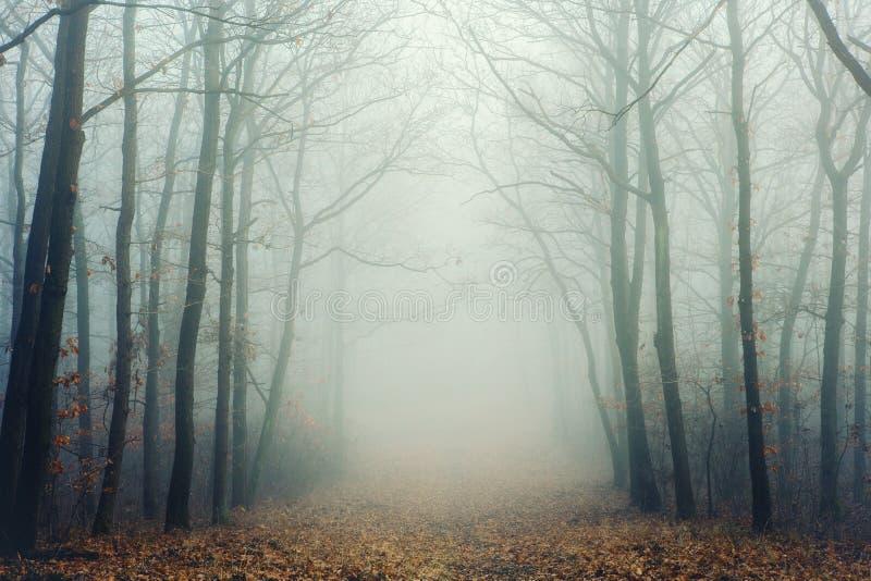Mysteriöser nebeliger Wald mit bloßen Bäumen stockfoto